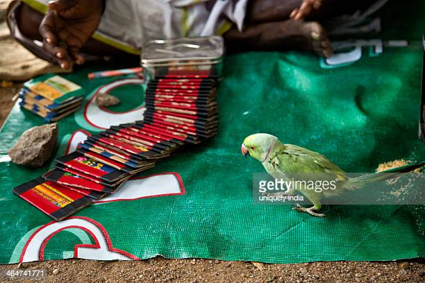 Parrot near tarot cards, Mahabalipuram, Kanchipuram District, Tamil Nadu, India