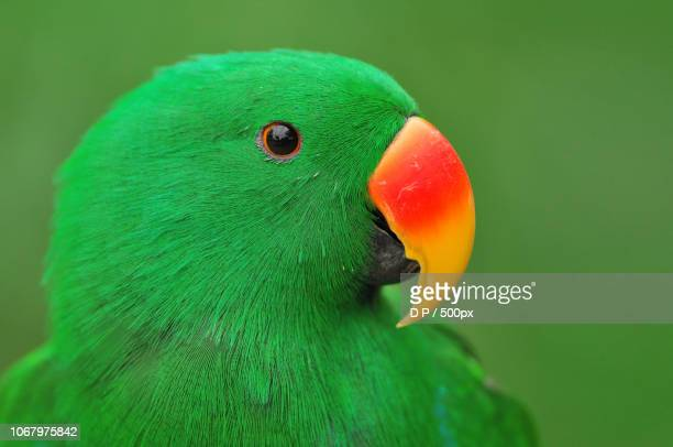 parrot on green background - oiseau tropical photos et images de collection