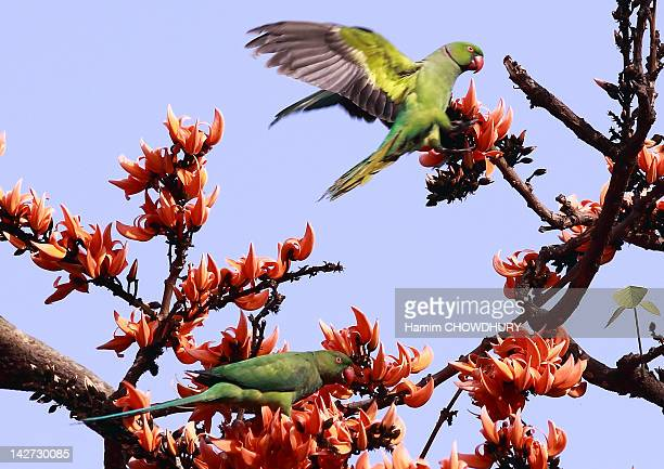 parrot on tree against sky - bangladeshi flowers stock pictures, royalty-free photos & images