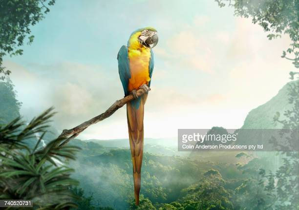 parrot perched on branch - oiseau tropical photos et images de collection