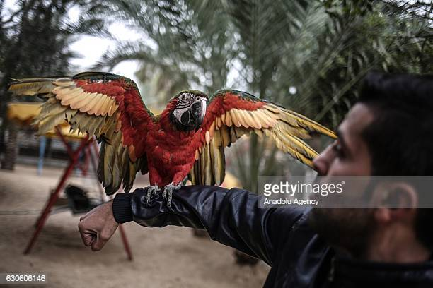 A parrot perches on a zookeeper's arm at the Zoo in Rafah Gaza on December 26 2016 Gaza's the first and one zoo which was established 17 years ago...