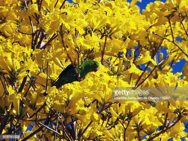 Parrot perching on autumn tree