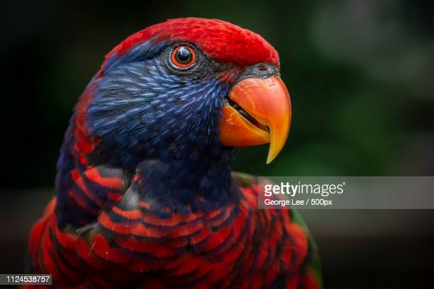 parrot - 嘴 ストックフォトと画像