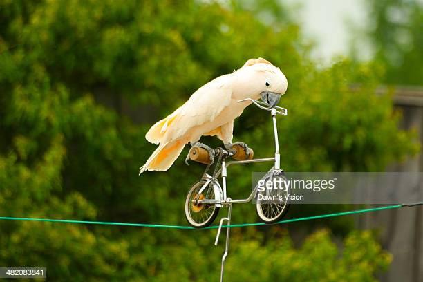 parrot - 働く動物 ストックフォトと画像
