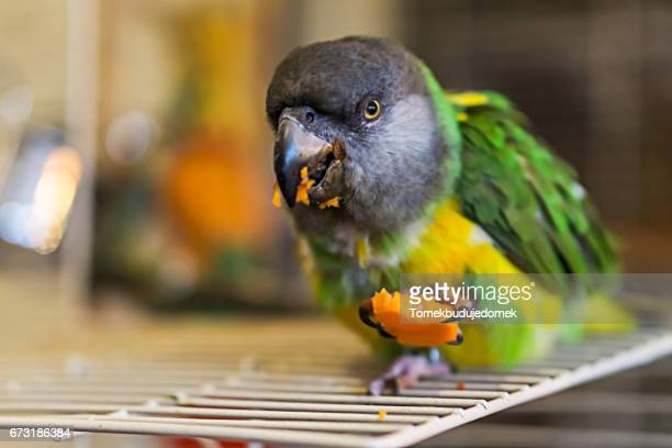parrot - variable schärfentiefe stock pictures, royalty-free photos & images