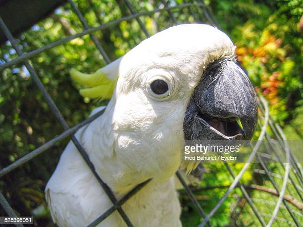 Parrot Sticking Out Head Through Cage