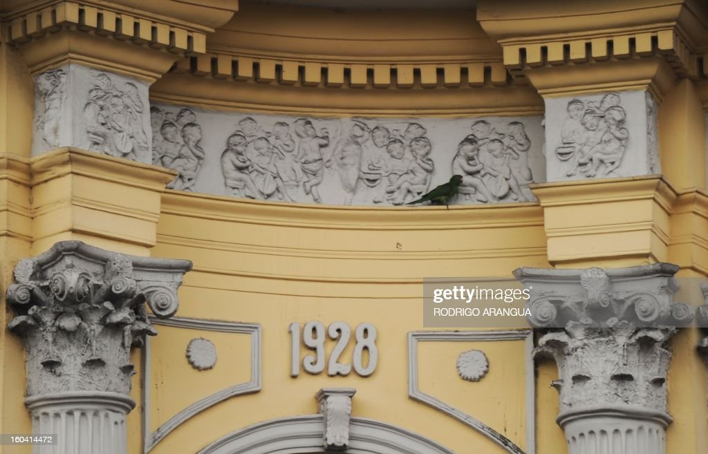 A parrot walks on the facade of a theatre in downtown San Jose, Costa Rica, on April 20, 2012. AFP PHOTO/Rodrigo ARANGUA /