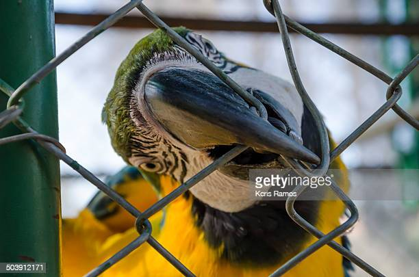 Parrot with beak in the grid
