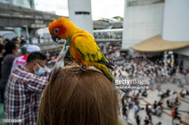 Parrot with protest sign is seen perching on the head of the owner during the Harry Potter-themed protest at Bangkok Art and Culture Center in...