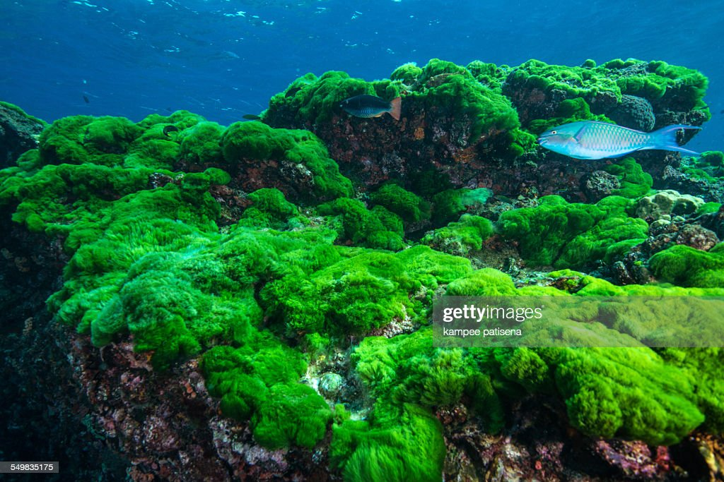 green algae stock photos and pictures getty images
