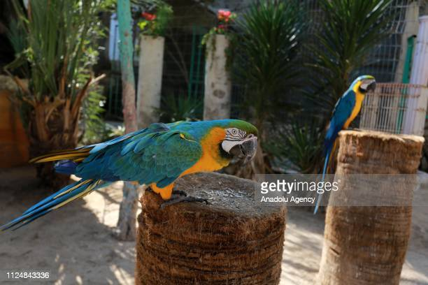 Parrots are seen at the Rafah Zoo in tGaza City Gaza on February 13 2019 Gaza's only animal care practice which was established 17 years ago faces...