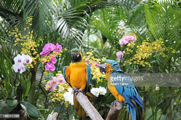 parrots in jurong bird park - jurong bird park stock pictures, royalty-free photos & images