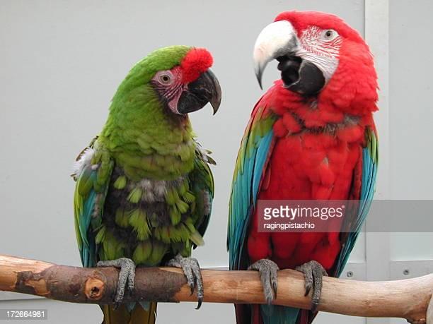 Papageien auf einem Ort