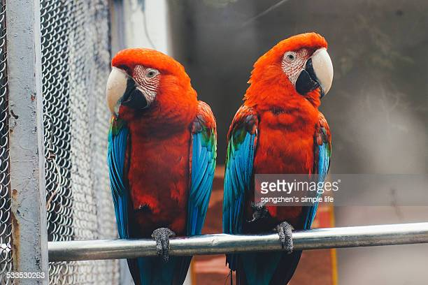parrots - changzhou stock pictures, royalty-free photos & images