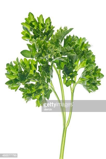 parsely Blätter und Stielgrün