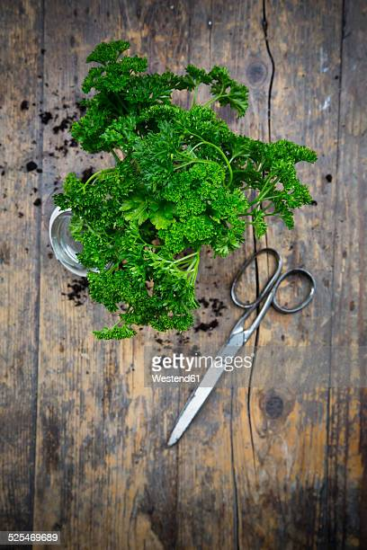 Parsley and scissors