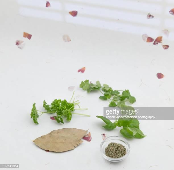 parsley cilantro basil dried bay leaf