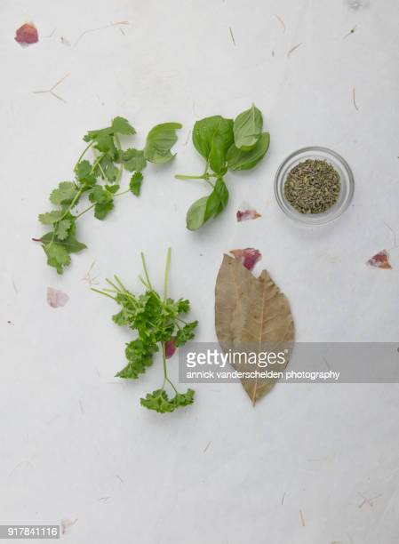 parsley cilantro basil dried bay leaf