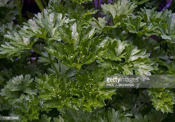 Parsley is seen for sale at a local Farmers Market in Annandale Virginia August 8 2013 AFP Photo/Paul J Richards