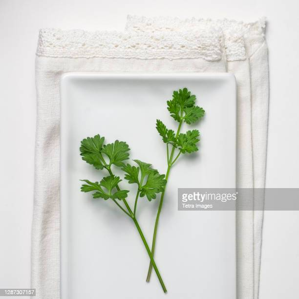 parsley on white background - parsley stock pictures, royalty-free photos & images