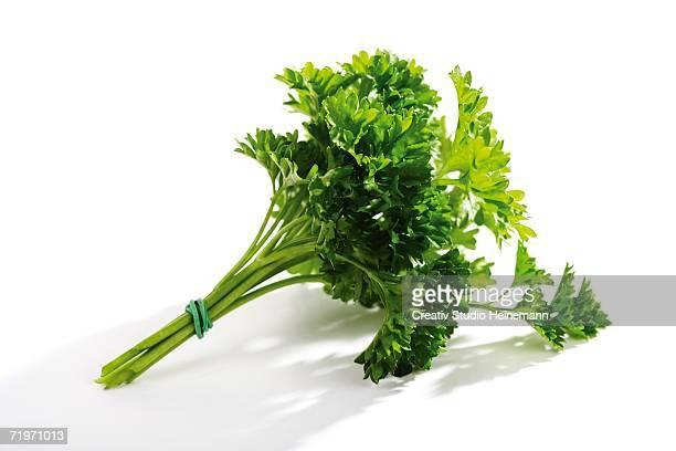 parsley, petroselinum - peterselie stockfoto's en -beelden