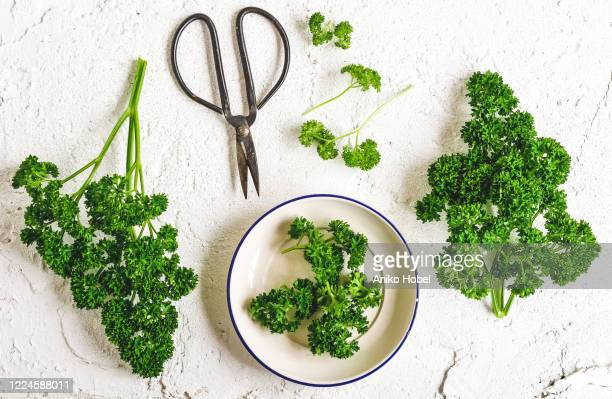 parsley - parsley stock pictures, royalty-free photos & images