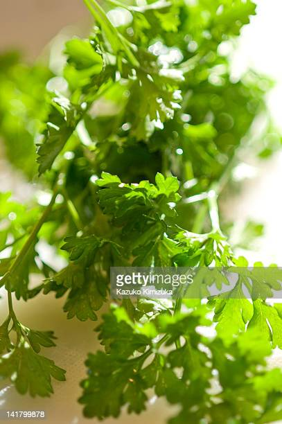 parsley - kazuko kimizuka stock pictures, royalty-free photos & images