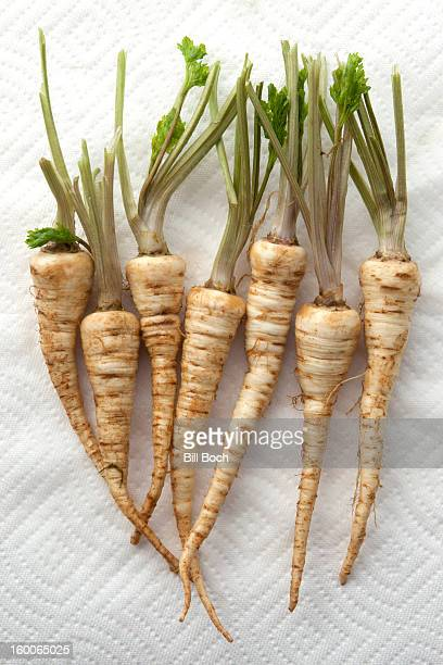 Parsley root drying on a paper towel