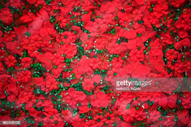 Part of a display of 645000 poppies are seem behind glass on the Mall near the Korean War Memorial on May 25 2018 in Washington DC The display is a...