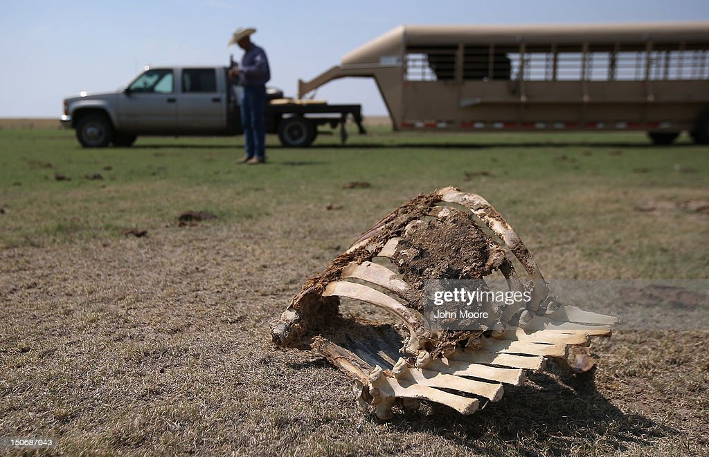 Historic Drought Cripples Ranches And Farms In American West : News Photo
