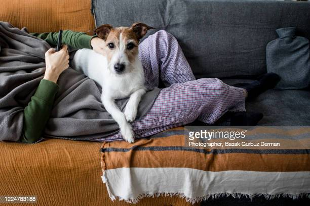 part of an ill woman lying on the sofa with her dog lying on her lap - safety stock pictures, royalty-free photos & images