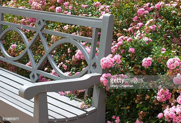 Part of bench surrounded by rose bushes