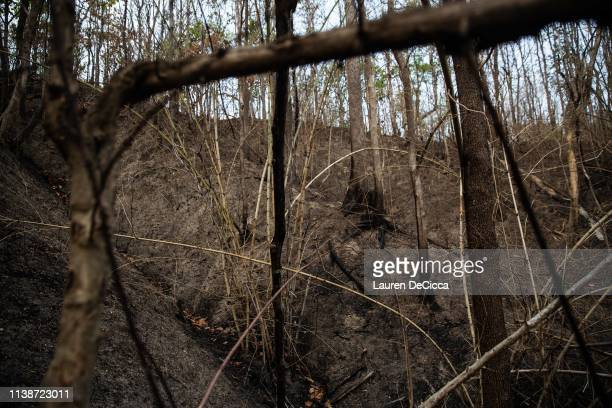 A part of the forest that was charred during a forest fire on April 22 2019 in Chiang Mai Thailand Thailand's Northern Provinces of Chiang Rai and...