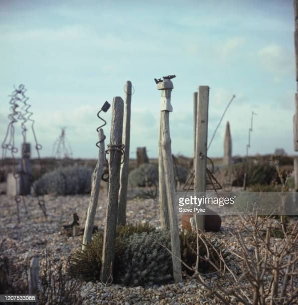 Part of the garden created by British filmmaker, Derek Jarman using shingle, driftwood, plants and scrap metal, at Prospect Cottage, his home on the...