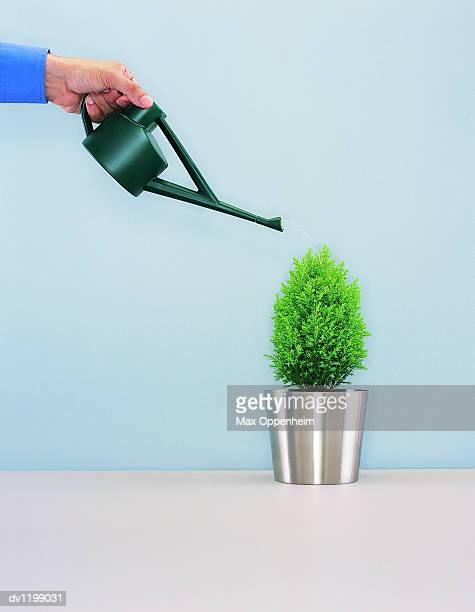 Part View of a Businessman Watering a Bush in a Pot With a Watering Can