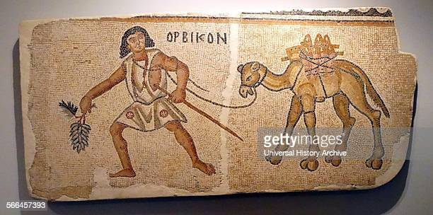 Partial Mosaic floor from a church depicting a man leading a camel Negev Dated 6th Century BC