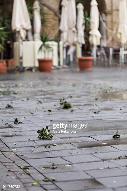 Partial vew of Queen Victoria Square, Valletta, Malta, after a heavy rain