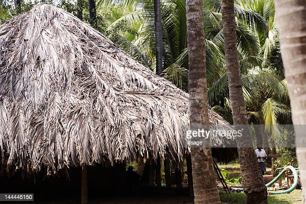 Partial view of a thatched roof of a hut