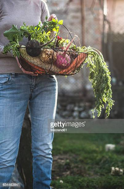 Partial view of woman holding wire basket with root vegetables