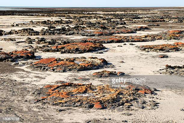 Partially extant stromatolite formations at the Hamlin Pool Marine Nature Reserve, Western Australia, Australia