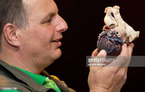 A participant in a special tour for the blind and visually impaired holds a plastinated heart in the exhibition 'Body Worlds' at the Olympiapark in...