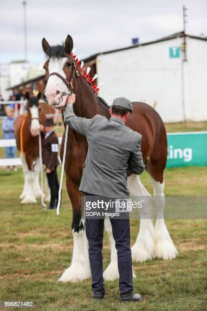 A participant seen taking care of his horse during the Great Yorkshire Show 2018 on day one The Great Yorkshire Show is the biggest 3 days...