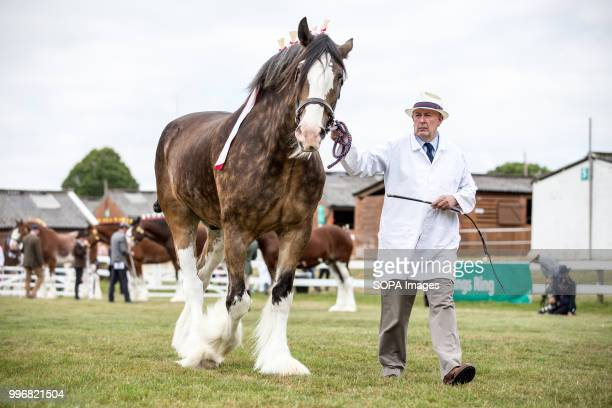 A participant seen walking with his horse during the Great Yorkshire Show 2018 on day one The Great Yorkshire Show is the biggest 3 days agricultural...