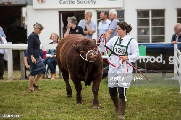 A participant seen with her cow during the Great Yorkshire Show 2018 on day one The Great Yorkshire Show is the biggest 3 days agricultural event in...