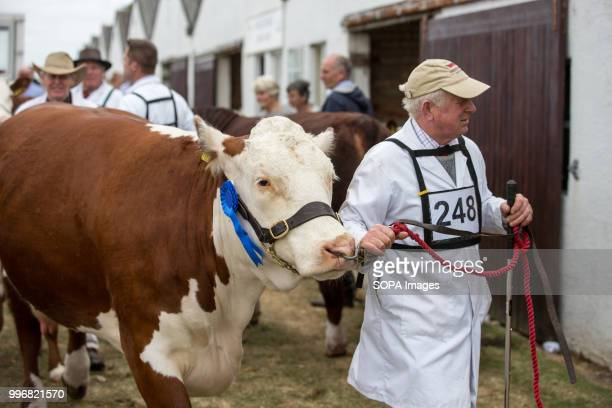 A participant seen with his cow during the Great Yorkshire Show 2018 on day one The Great Yorkshire Show is the biggest 3 days agricultural event in...