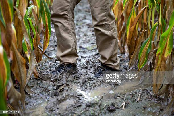 A participant stands in a muddy corn field during a stop on the Midwest Crop Tour in Elizaville Indiana US on Tuesday Aug 21 2018 Sodden corn and soy...