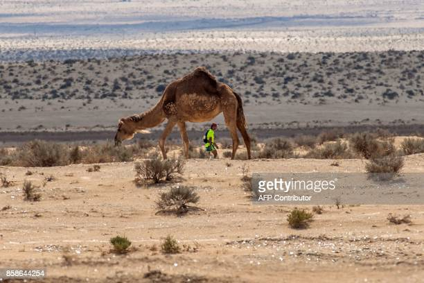 A participant walks past a camel during the Ultra Mirage El Djerid marathon in the desert near the southwestern Tunisian city of Tozeur on October 7...
