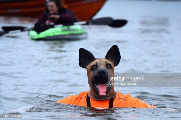 A participant wears a dog costume as he takes part in the annual New Year's Day Loony Dook swim in the Firth of Forth in South Queensferry near...