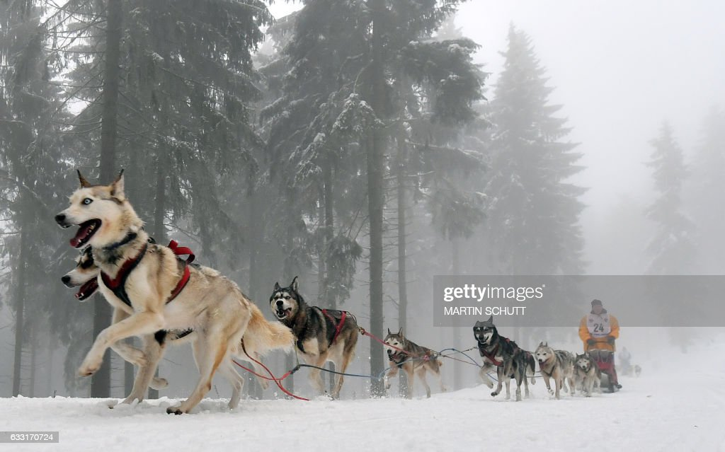 Participants compete in the 'Trans Thueringia 2017' sled dog