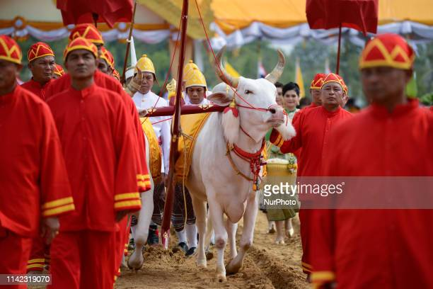 Participants guide oxen as they pull a plow through the soil during the Royal Ploughing Ceremony at the Sanam Luang park in Bangkok, Thailand. 09...